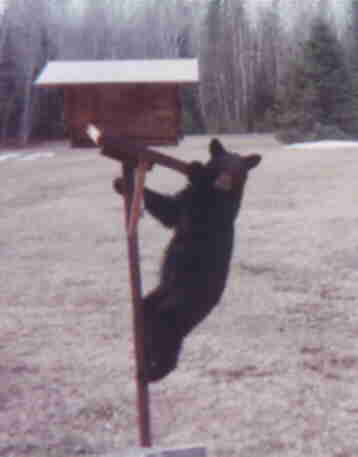 [bear cub on bird feeder]